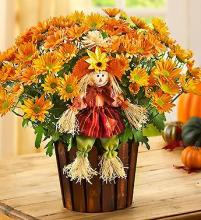 Fall Country Mum